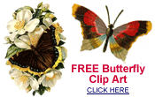 free butterfly pictures