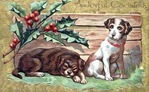 vintage-Christmas-card-brown-dog-white-dog-holly