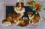 vintage-Christmas-card-Collie-dog-puppies-holly