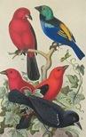 BIRDS 46