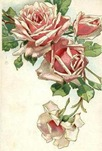 free vintage clip art pink roses cascade