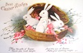 free vintage Easter card three white bunnies in a basket