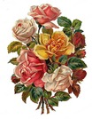 free vintage white yellow pink red roses bouquet clip art