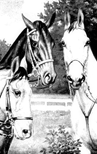 three horses coloring page