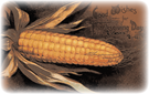 vintage-Thanksgiving-clip-art-corn