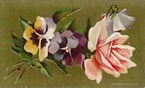 free vintage pink cabbage rose clipart with pansies mothers day card