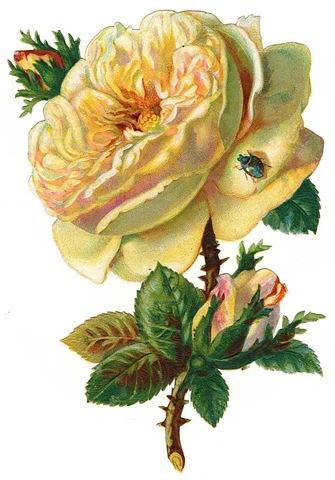 http://vintageholidaycrafts.com/wp-content/uploads/2009/03/free-white-vintage-cabbage-rose-with-buds.jpg