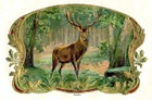 free vintage Fathers Day card stag in the forest