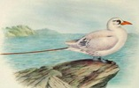 free vintage clip art nautical seagull on the ocean