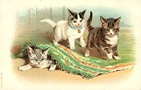 vintage cat clip art three playful kittens under rug