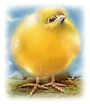 vintage Easter clipart yellow chick