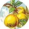 vintage Thanksgiving clip art yellow apples