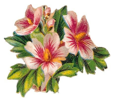 Free vintage flowers clip art vintage holiday crafts free vintage cli art flowers pink white hibiscus mightylinksfo Choice Image