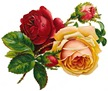 free vintage roses red and yellow with buds